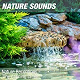 Nature Sounds for Study, Focus & Work (Calm forest pond) 29
