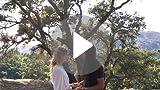 Amazon.com: lovetuner Bronce – Cadena de bolas (Bronce ...