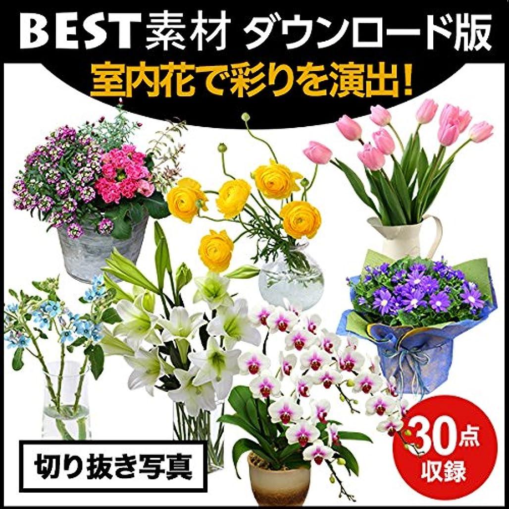 クリスマス大使館ブル【BEST素材】室内花で彩りを演出!  ダウンロード版