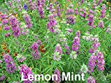 Please Read! This is A Mix!!! 100+ Mint Mix 4 Varieties: Peppermint, Spearmint, Lemon Mint & Lemon Balm Melissa Seeds Heirloom Non-GMO. The Seeds are Mixed!!!