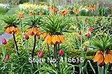 ! PERTE DE VENTE PROMOTION! 100 Imperial Crown Seeds Premier Seeds fritillaire impériale Facile à cultiver jardin Couvre-sol Graine de plantes + Mystery Gift