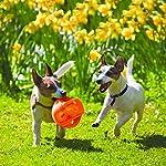 KONG - Jumbler Ball - Jouet Interactif pour Chien avec Balle de Tennis (Coloris Divers) - pour Chien Moyen/Grand #1