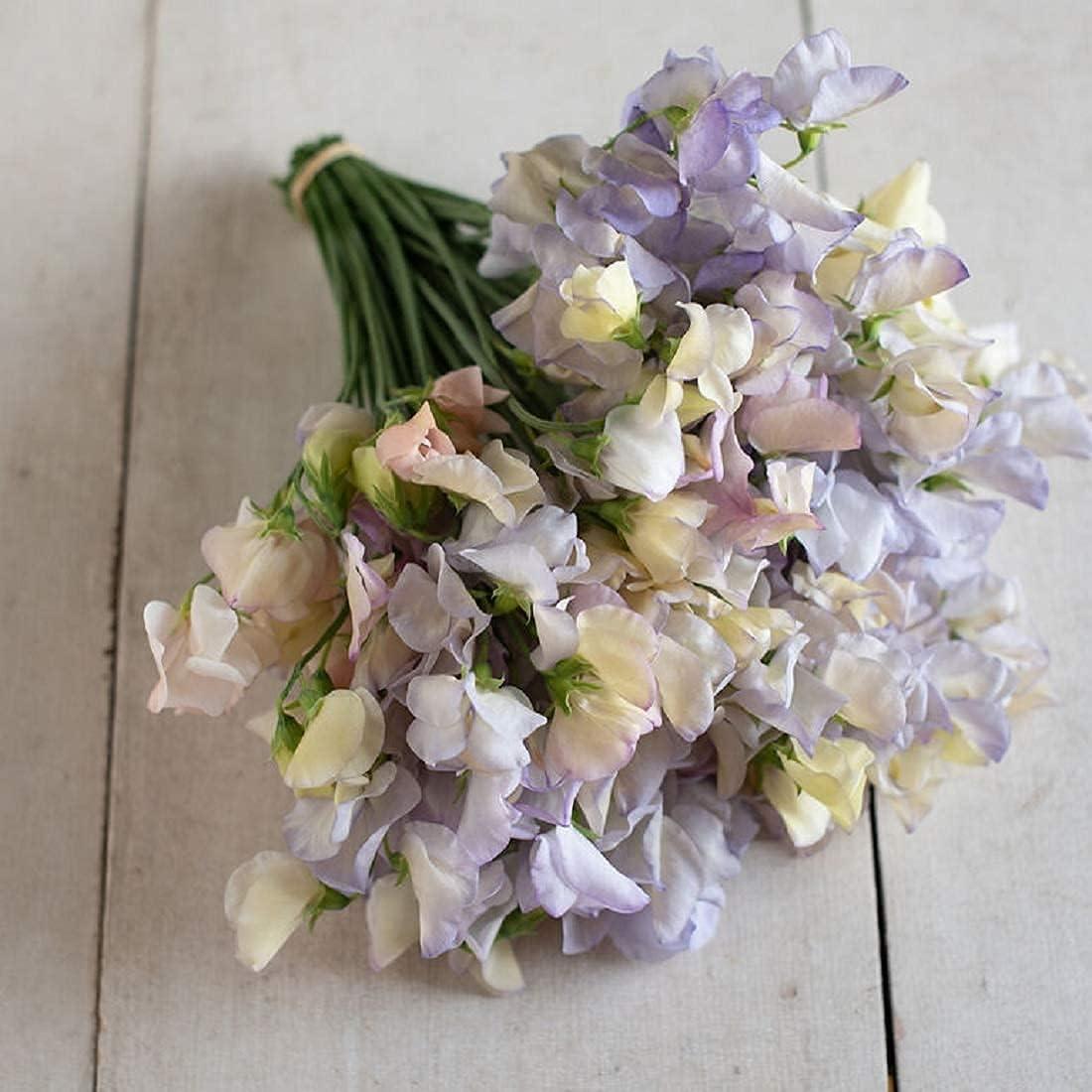 25% OFF David's Max 78% OFF Garden Seeds Flower Sweet Pea N Times 50 SAL Old Multi