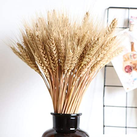HXHON 100pcs Dried Wheat Decorative Large Wheat Ears Dry Grass Bouquet Primary Colors Dried Flower Wheat for Wedding Decorations Photography