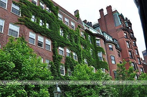 graines 20pcs Boston Ivy / Parthenocissus tricuspidata Pour bricolage Home & Garden en plein air Plantes Graines Bonsai Graines Climber spectaculaires