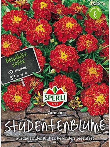 toom Für prachtvolle Sommerblumen