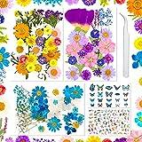 Flores secas reales prensadas Sirecal 202 piezas de hojas de flores secas para...