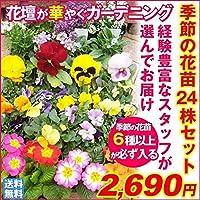 国華園 季節の花苗 24ポットセット 21年春商品