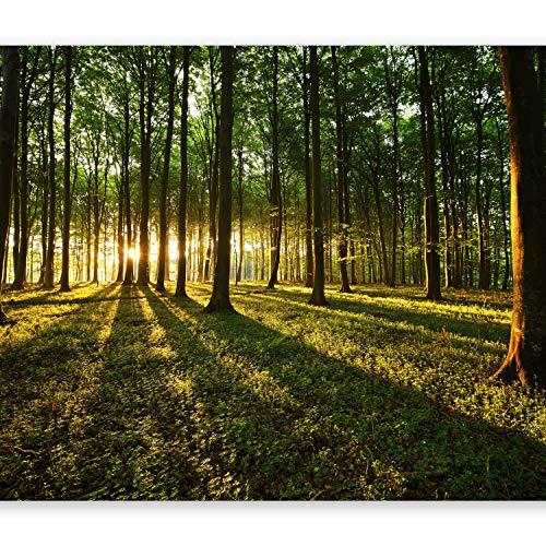 murando Fototapete Wald 350x256 cm Vlies Tapeten Wandtapete XXL Moderne Wanddeko Design Wand Dekoration Wohnzimmer Schlafzimmer Büro Flur Sonnenschein Bäume Natur Landschaft c-B-0027-a-b