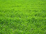 Nature's Seed TURF-LOPE-1000-F Perennial Ryegrass Seed Blend, 1,000 sq. ft