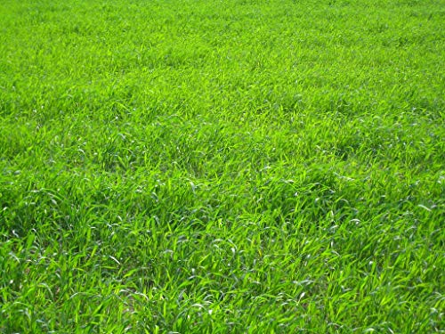 Nature's Seed TURF-LOPE-1000-F Perennial Ryegrass Seed Blend, 1000 sq. ft