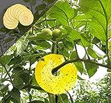Greenvass Disctrap, trappola autoadesiva, per il controllo di insetti su alberi e vaso da esterno, confezione da 10 pezzi (giallo)