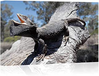 Eastern Bearded Dragon Arts Canvas Print for Living Room Decoration,126903 Painting Wall Art Picture Print on Canvas,16