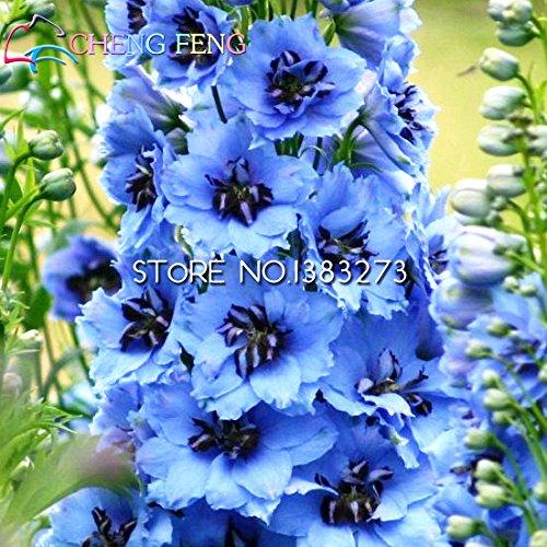 Livraison gratuite Pack 1 30 Graines Mixtes Rocket Colourful Larkspur Graines Consolida Delphinium fleurs pour plantes Jardin Décoration