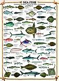 Educational Sea Fish - Seefische Bildung Lernposter Druck +