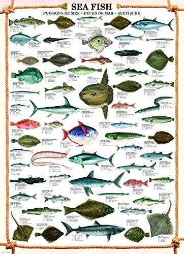 Educational Sea Fish - Seefische Bildung Lernposter Druck
