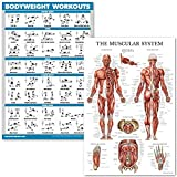 QuickFit Bodyweight Workouts and Muscular System Anatomy Poster Set - Laminated 2 Chart Set - Body Weight Exercise Routine & Anatomical Muscle Diagram (18' x 27')