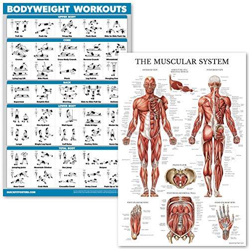 QuickFit Bodyweight Workouts and Muscular System Anatomy Poster Set – laminiertes 2 Diagramm-Set – Körpergewicht, Routine & Muskelanatomie Diagramm 45,7 x 68,6 cm, LAMINATED, 18