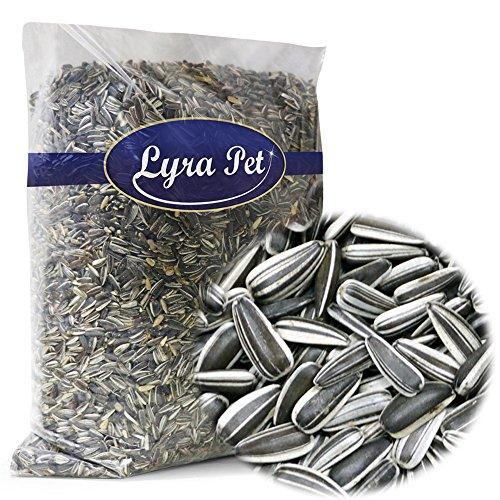 Lyra Pet 20® kg Sonnenblumenkerne gestreift Wildvogelfutter Vogelfutter Ernte 2020