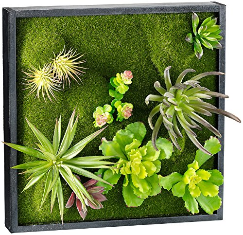 Carlo Milano Wandgarten innen: Vertikaler Wandgarten Karl mit Deko-Pflanzen, 30 x 30 cm (Wand-Garten)