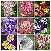AGROBITS Importato Columbine per piante Aquilegia vulgaris Rare pianta i bonsai Fiore per la casa giardino di fiori in vaso 100 Pz: 19 #1