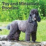 Toy and Miniature Poodles - Toypudel und Zwergpudel 2020 - 16-Monatskalender mit freier DogDays-App: Original BrownTrout-Kalender [Mehrsprachig] [Kalender] (Wall-Kalender)