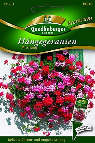 Geranien Hänge- Mischung - Pelargonium zonale QLB Premium Saatgut Balkonblumen