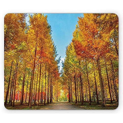 Island muismat, aardweg met bomen in de herfst in Nami Island van Zuid-Korea-foto, Pale Sky Blue en meerdere kleuren