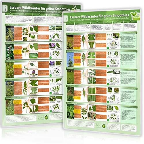 [2er Set] Essbare Wildkräuter für Grüne Smoothies (DINA4) Erkennungskarten Teil 1 und Teil 2 (2020: Schnell eindeutig erkennen, selber sammeln und mit ... selber sammeln und mit gutem Gefühl genießen)
