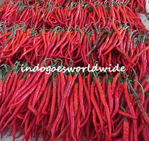 PLAT FIRM GERMINATIONSAMEN: 20 Samen: KOPAY CHILI SEEDS 28-33 cm Indonesische Monstergröße Heißer Roter Pfeffer KOSTENLOSER VERSAND