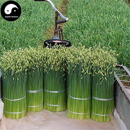 Acheter Racine Leek de épices graines de plantes Légumes Persil Ail Ciboulette