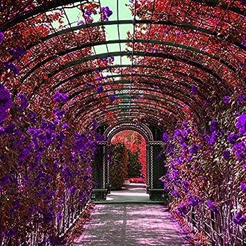 Lavender Feeling