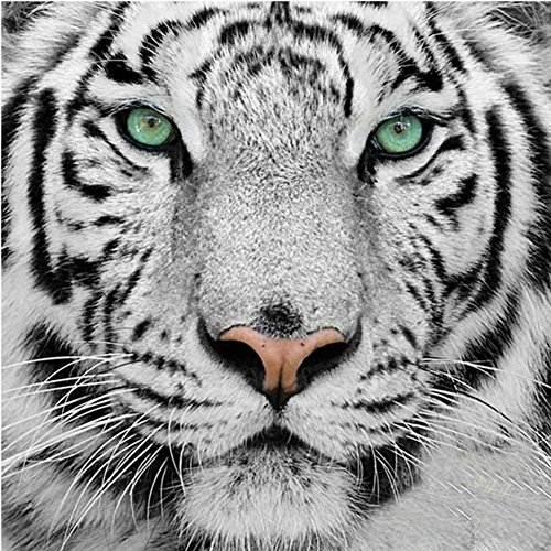 Fairylove 12×12 Diamond Painting Kit Full Animal Looks Cross Stitch Kit Needlework Handmade Embroidery Kit Home Room Decor,White Tiger