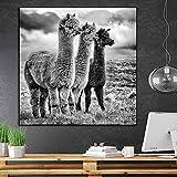 Mode Schwarz-Weiß-Lama-Poster Tier Leinwand Gemälde,