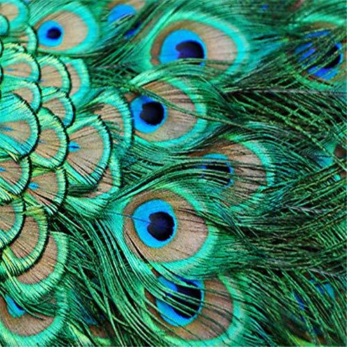XAONUO Pintura por números Pluma de pájaro Azul artístico para Adultos y niños Kits de Regalo de Pintura al óleo de Bricolaje Arte de Lienzo preimpreso Decoración del hogar 16x20 Pulgadas Sin Marco