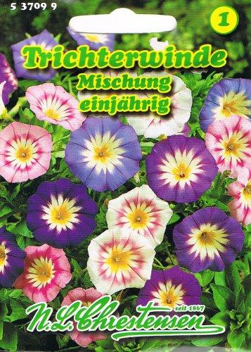 Trichterwinde Mischung ,einjährig, große trichterförmige Blüten 'Convolvulus tricolor' Winde Saatgut