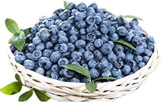 Prairie Berry Blueberry 300+ Seeds + 1 Free Plant Markers - Sweet Clusters of Firm, grapelike Berries.