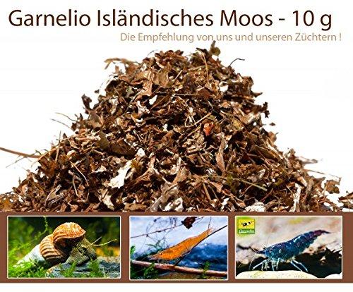 garnelio–islän ortopédica musgo–10G–Camarones Forro