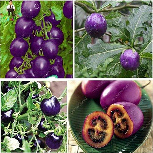 100pcs Graines de tomate Fruits pourpre cerise bio de tomate Graines Bonsai légumes semences saines jardin des plantes vertes en pot