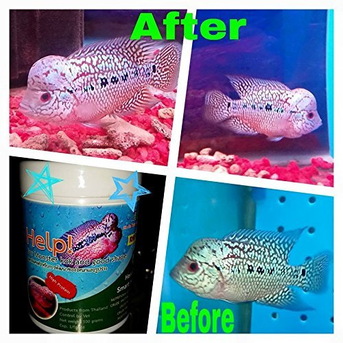 Cz Help For Monster Kok Flowerhorn Buy Online In Saudi Arabia