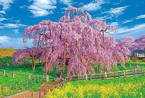 1000 piece jigsaw puzzle full bloom of Miharu Takizakura (49x72cm)