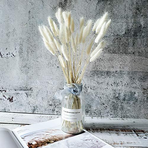 TRvancat 100 Stck Bunny Tails Grass - Natürliche getrocknete Pampasgras Schilfgrasfahne Getrocknete Blume Ried für Hochzeits-Blumenarrangements Heimdekor (Weiß)