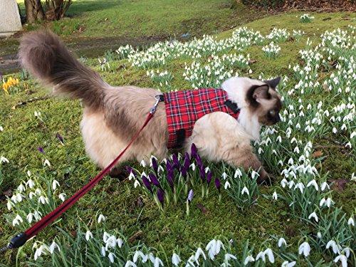 Mynwood Cat Jacket/Harness Royal Stewart Tartan Adult Cat - Escape Proof