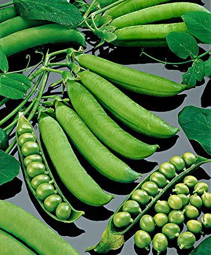 Qulista Samenhaus - 30pcs Markerbsen Schalerbsen 'Kleine Rheinländerin' niedrig wachsend ertragreich Erbse Saatgut Bio Gemüse Samen winterhart mehrjährig