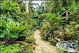 Muralo 1036958296 - Papel Pintado fotográfico (Fieltro), diseño de jardín Botánico en la Isla del Caribe, vellón, Multicolor, Hö. 180 x BR. 270 cm- 3 Bahnen