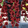 semi 100PCS Cymbidium, Cymbidium orchidea, fiori in vaso, ha un significato della longevità, per la casa e la decorazione del giardino A15 #4