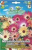 Hortus 60SDFM054 Fiorevivo Mesembriantemo o Tapeto Magico, Mix, 13x0.2x20 cm