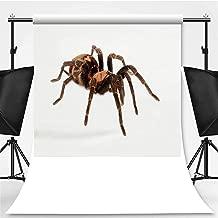Costa Rican Tiger Rump Tarantula on White Background Photography Background,051703 for Photography,Pictorial Cloth:5x7ft