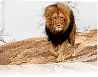 Animal Mammal Lion Male Mane Pride King Rock Danger Predator Wildlife Africa Savanna Nature Kruger Canvas Prints Wall Art,014329 Painting Wall Art Picture Print on Canvas,36