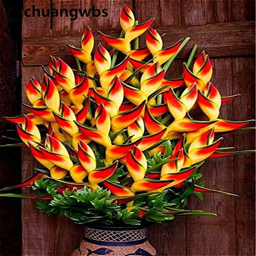 GETSO Indoor Topfpflanze Blüte orange Strelitzia Reginae Bonsai Paradiesvogel Bonsai Jardim Bonsai Sementes 100 Partikel/Lot